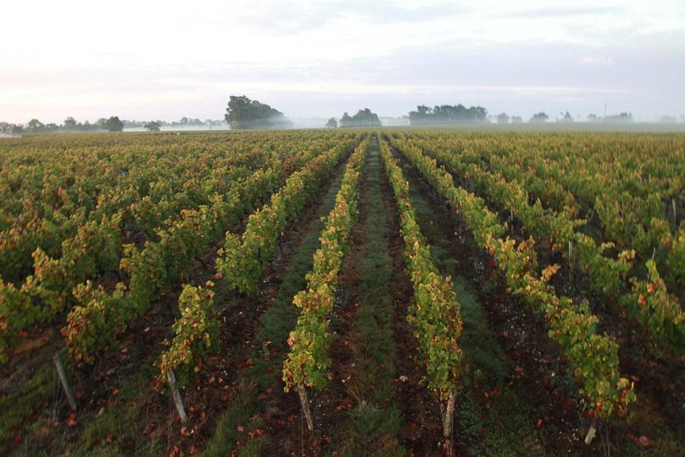 terroir-vignoble-chateau-laujac